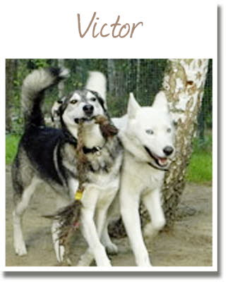 001_Victor_2014